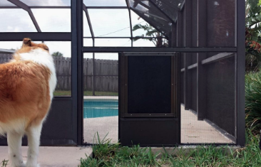 Pool screen equipped with a pet door.